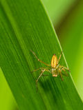 Small spider on the grass Royalty Free Stock Photos