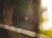 Small spider in its web. Little, small, arachnid, constructing, elaborate, still, spiral, incomplete, in progress, unfinished, spun, spin, spinning, large spider Stock Photo