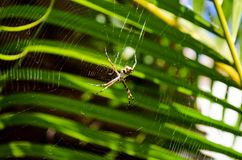 A small spider in its web with palm leaves in the background. Very close Stock Photos