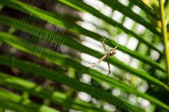 A small spider in its web with palm leaves in the background. Very close Stock Photography