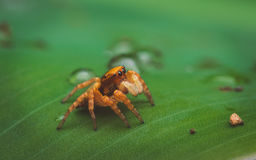 Small spider Royalty Free Stock Photo