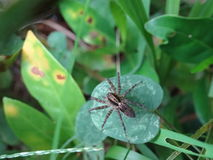 Small spider Stock Photos