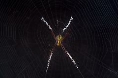 Small spider on net with dark background Stock Photo