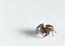 Small spider on paper Royalty Free Stock Images