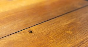 Small spider runs on a wooden table royalty free stock image