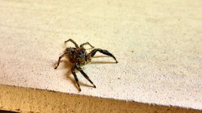 Small spider sits on the wall Royalty Free Stock Photo