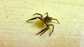 Small spider sits on the wall Royalty Free Stock Images