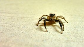 Small spider sits on the wall Stock Photo