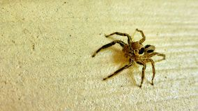 Small spider sits on the wall Royalty Free Stock Photos