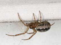 Small spider sitting on wall. Royalty Free Stock Images