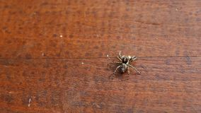 Small spider. On the wood stock video footage