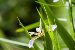 Small spider walking on flower leaf Stock Photo