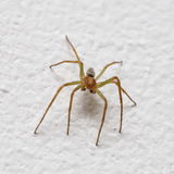Small spider on wall Stock Photos