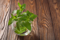 Small sprig of mint on a wooden background. Small sprig of mint on  wooden background Royalty Free Stock Images