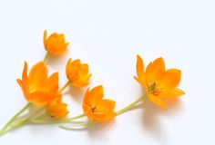 Small spring bouquet Royalty Free Stock Photos