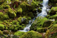 Small spring cascades through mossy rocks. A small spring cascades down flowing over moss covered rocks along a hiking trail in Mt. Hood National Forest Royalty Free Stock Photos