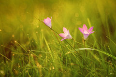 Small spring flowers in a field Stock Photos