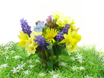 Small spring garden flowers Stock Images