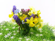Small spring garden flowers Royalty Free Stock Images
