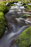 Small spring in green forest Stock Photo