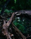 Holy Land Series - Judea Mountains - Ein Tanur Tanur spring stock photo