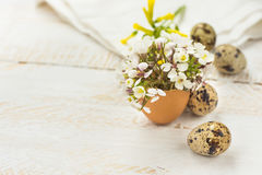 Small spring yellow white flowers in eggshell, quail eggs, wood background, Easter decoration Royalty Free Stock Photo