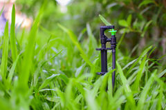 Small sprinkler head. With black pipe installed in grass field royalty free stock photos