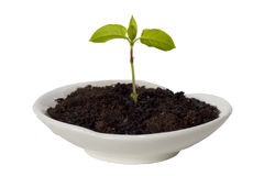 Small sprout Royalty Free Stock Photos