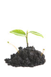 Small Sprout Stock Images