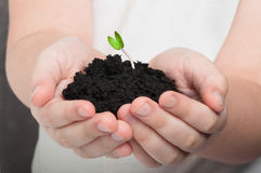 Small sprout in baby's hands. Baby is holding a pile of soil with tiny sprout in his hands stock image