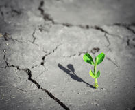 Small sprout. Royalty Free Stock Images