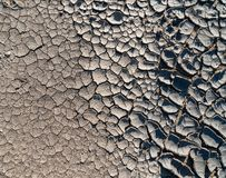 Small sprout growing on cracked earth stock images