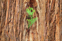 Small sprout on old tree, symbolizing new life, new project or n Stock Images