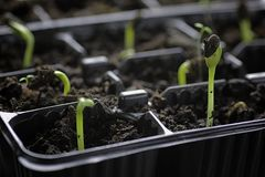 Small sprout from seeds Stock Images