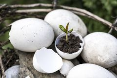 A small sprout of a tree or plant grows in the ground in an eggshell on a white background with space for text, advertising. Creative idea, copy space stock photos