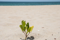 A small sprout of a tree on the sandy beach Royalty Free Stock Images