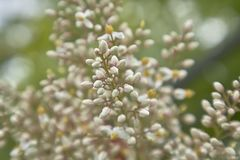 Small sprouts in spring. Small white buds of some flowers that bloom in spring Stock Image