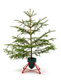 Small spruce Stock Photos