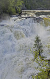 Small spruce above a large waterfall Stock Photos