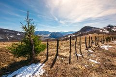 Small spruce tree by the fence on top of a hill stock images