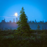 Small spruce tree at night Stock Image