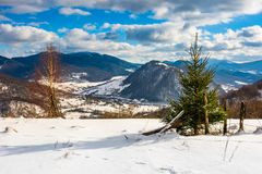 Small spruce tree on the slope stock images