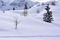 Minimalism Landscape Winter Snowy Background. Small spruce trees and larch trees and other trees in cold winter surrounded with a lot of fresh snow. Minimalist stock image