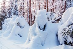 Small spruce trees in the winter forest covered with lots of snow royalty free stock image