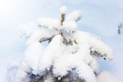 A small spruce in the winter forest and a lot of snow Royalty Free Stock Photography