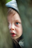 Small spy. Baby boy looking through hollow of a tree trunk Stock Image