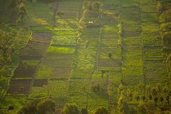 Small squared fields at sunset, Great Rift Valley, Kenya. East Africa Royalty Free Stock Photo