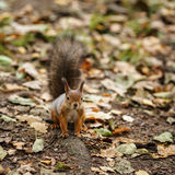 Small squirell in the park Stock Photo