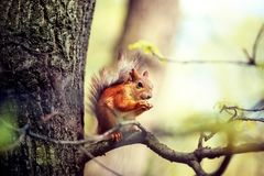 Little squirrel in the spring royalty free stock photography