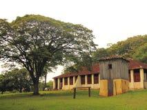 Barn and tuia royalty free stock image